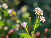 Petite wild flowers