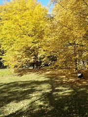 Herbst in Prag