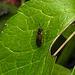 20200520 7556CPw [D~LIP] Insekt, Bad Salzuflen