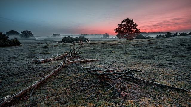 Morgendlicht im Nebel