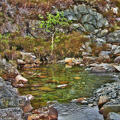 Rowan by the River