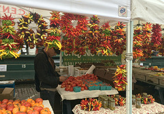 Chilies - colourfest