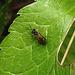 20200520 7557CPw [D~LIP] Insekt, Bad Salzuflen