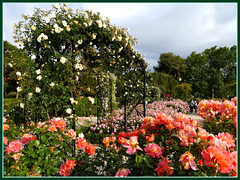 El Retiro rose garden.