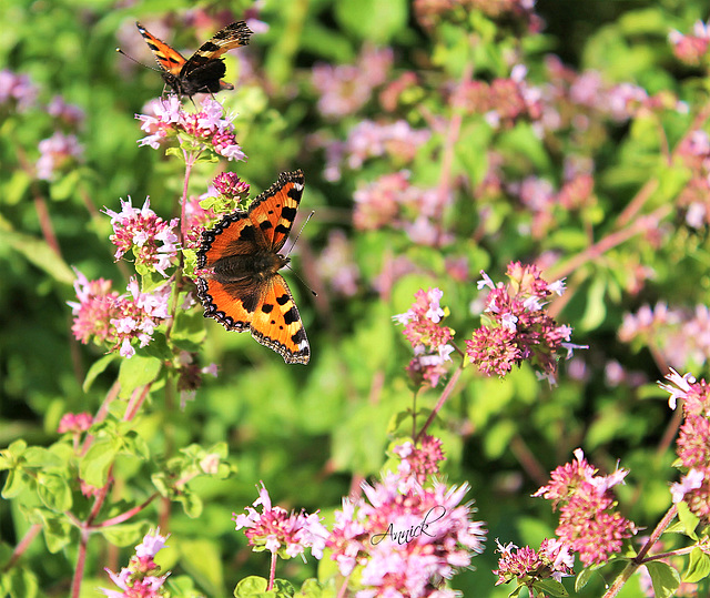 Heureux papillons