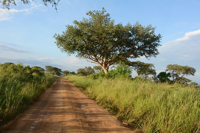 Dusty Road in Ugandan Savannah