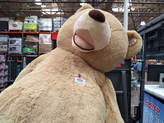 Typical HUGE Costco Bear