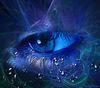 L'oeil bleu...