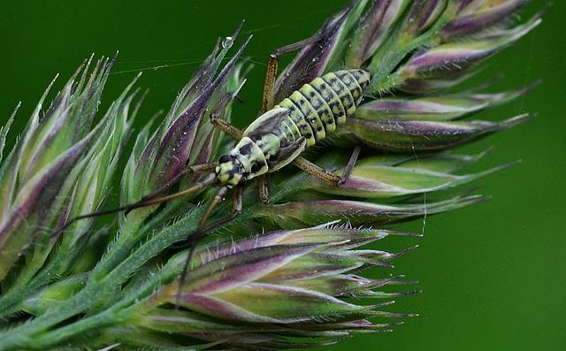 Plant Bug??