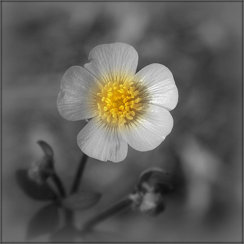Une fleur par jour.... - Page 6 41668772.31c32f9c.800