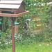 oaw - clever woodpecker