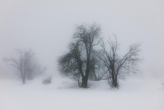 Nebel im Winter -  20150101