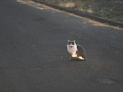 Posing kitty