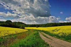 Ein schöner Frühlingstag - A sunny Spring Day - Un jour de printemps