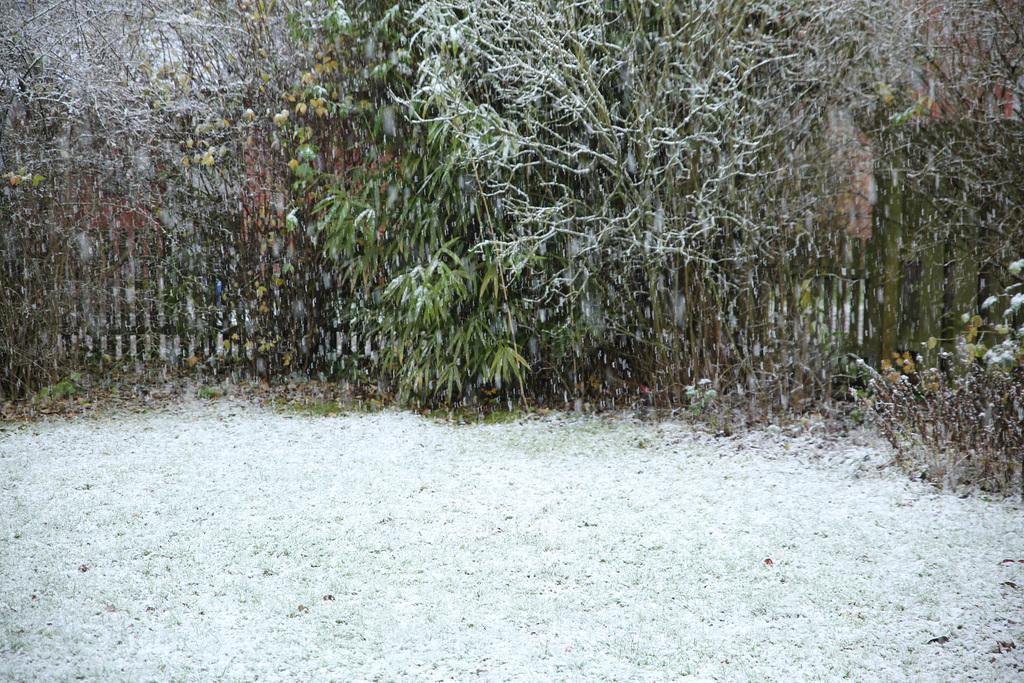 Juchhe ! Der erste Schnee ! HFF !