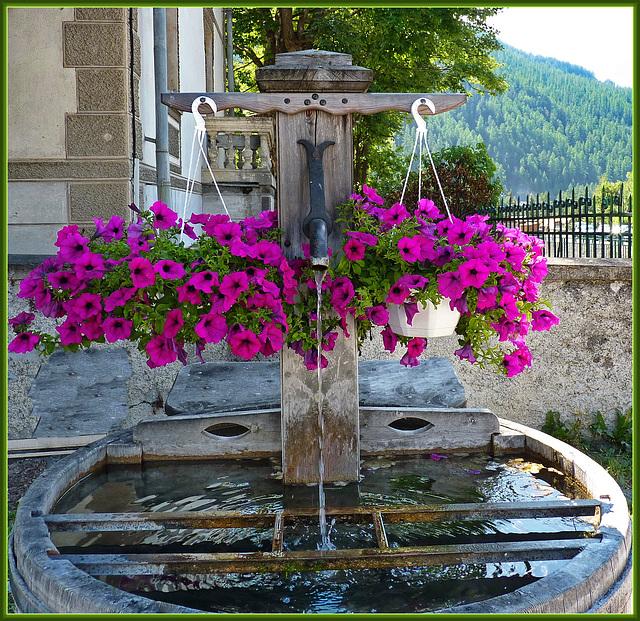 Abriès : Pink flowers - (856)