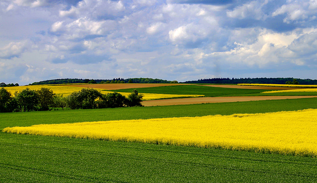 A rural Landscape in Spring