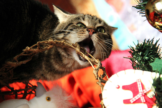 Merry Catmas with Mr M