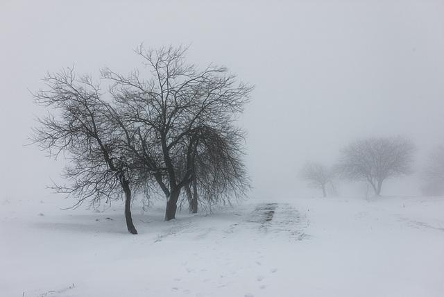 Winternebel - 20150101