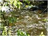 Combourg : l'eau  coule depuis le lac tranquille