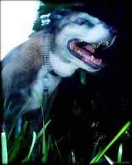 Hound of Baskerville