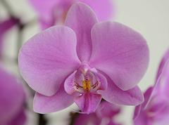 Macro sur une orchidée