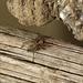Patio Spider Visitor