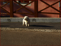 the shadow dog ... HFF