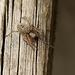 Patio Spider Visitor (2)
