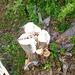 Mushrooms appetizers