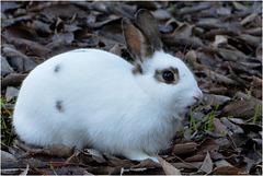 Pinpin ... le lapin ... m'a à l'oeil !