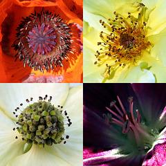 Variety in our garden