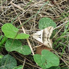 Day 5, Moth, King Ranch, Norias Division, Texas