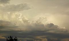 Babyelephantus cloud