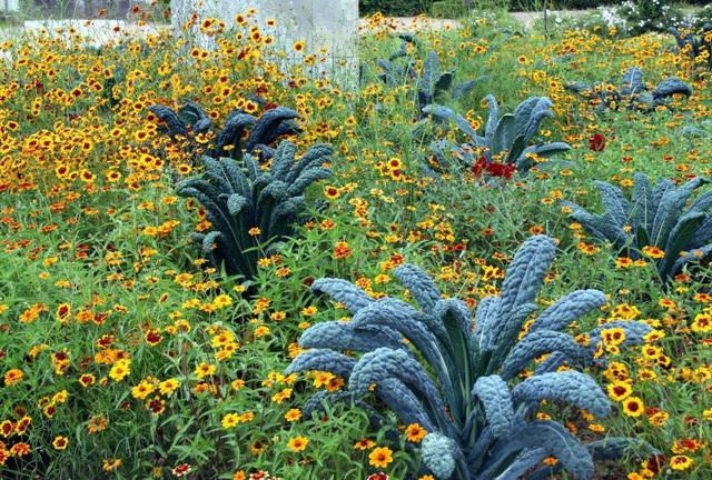 Noirs de Toscane parmi les fleurs