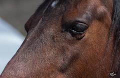 297/366: Friendly Bay Horse