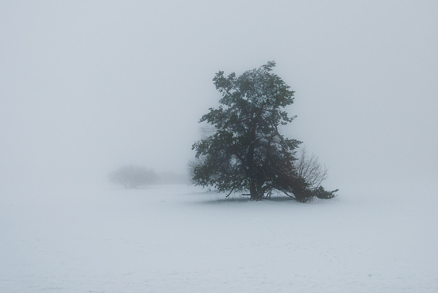 Winternebel - 20150101