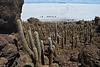Bolivia, Isla del Pescado (Fish Island), Western Landing