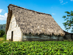 Tobacco barn, Valle de Viñales, Cuba