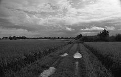 Rain clouds over rice fields