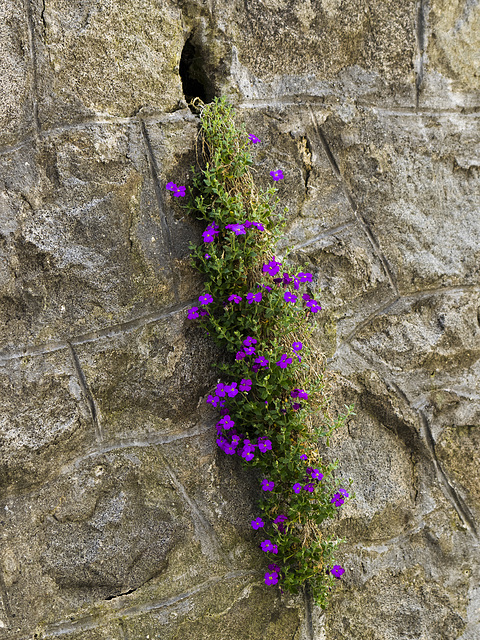 A small hole in the wall and nature took advantage