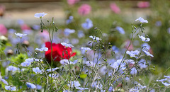 Dites le avec des fleurs... Bonne semaine