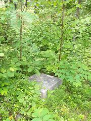 Buried amongst full nature