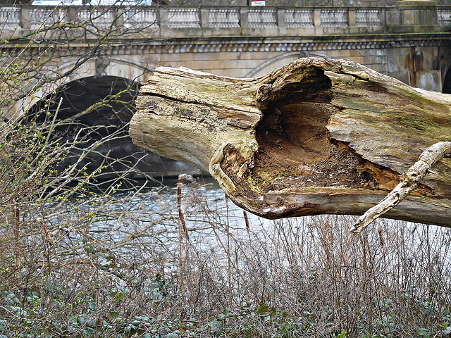 Bark and bridge