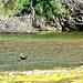 On Whakatane River.
