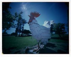 McCoy Chicken