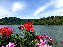 DE - Boppard - Promenade along the Rhine