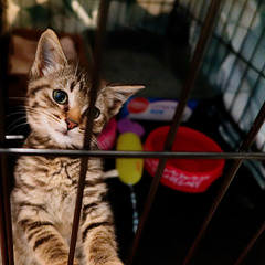 Bernie, caged