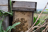 Honey bee box