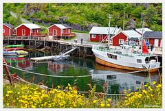 Elltor at Nusfjord harbour